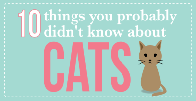 cats_big