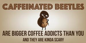 coffeebeetle_big
