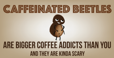 coffeebeetle_big