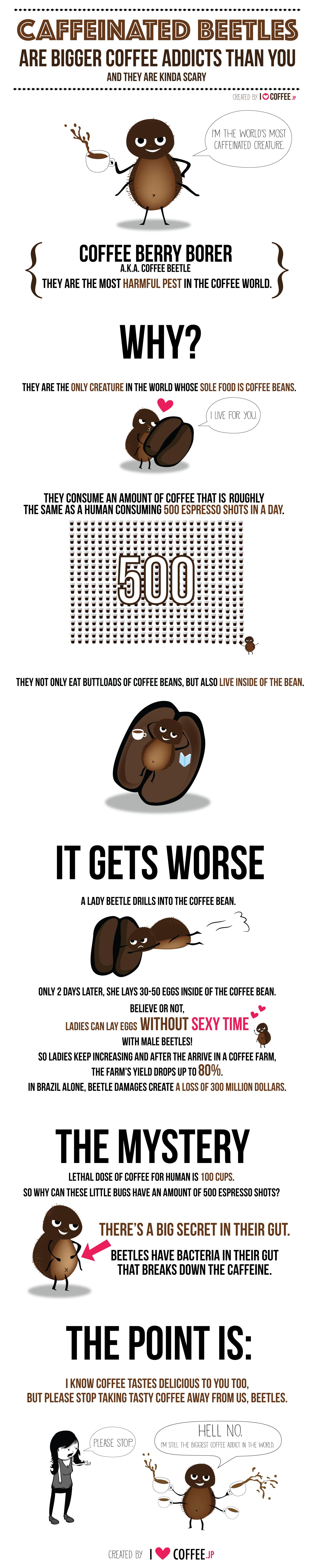 coffeebeetle