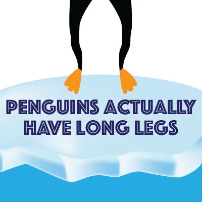 penguin_legs