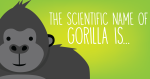The scientific name of Gorilla is…