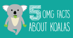 5 OMG facts about Koalas