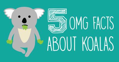 koala_big